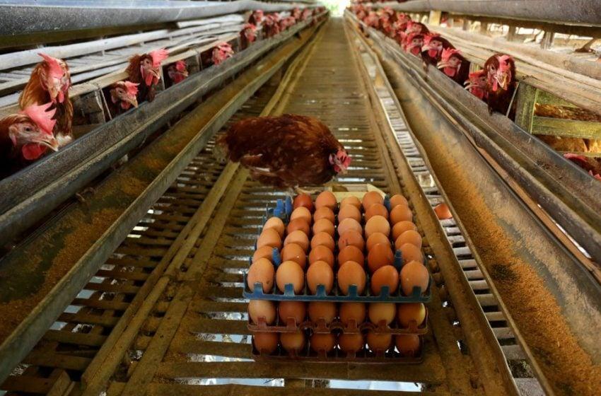 Japfa Bangun Pabrik Penetasan Telur di Aceh
