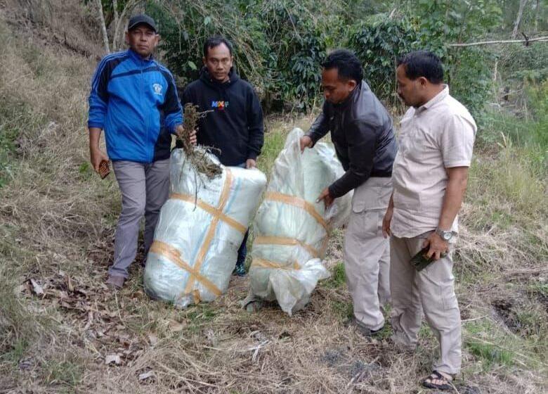 Warga Aceh Tengah Temukan 48 Kilogram Ganja Kering Di Kebun Kopi