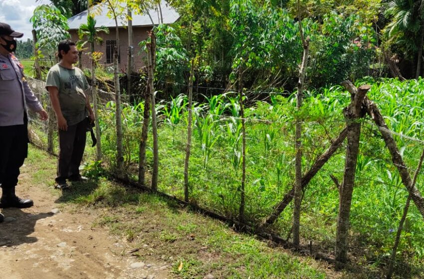 Ini Program Ketahanan Pangan Polisi Aceh Ditengah Pandemi Covid-19